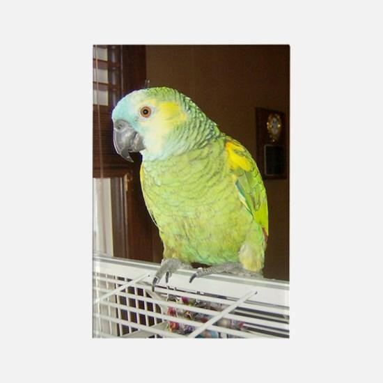 Amazon Parrot1100x1500 Rectangle Magnet