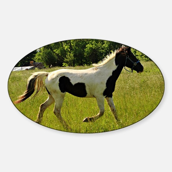 Spotted Horse Sticker (Oval)