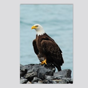 TabletCases_eagle_4 Postcards (Package of 8)