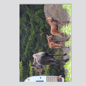 TabletCases_moose_2 Postcards (Package of 8)