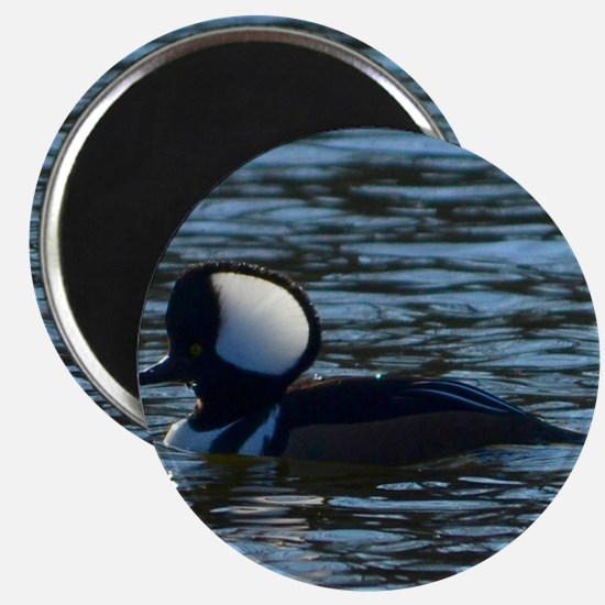hooded merganser 2nd crop 2000x2000 Magnet