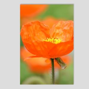 Orange Iceland Poppy Flow Postcards (Package of 8)