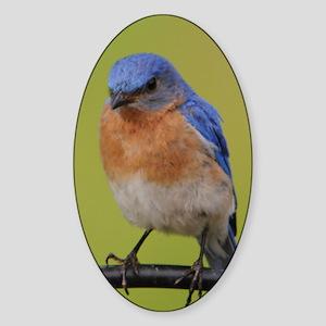 1100x1500eastern bluebird Sticker (Oval)