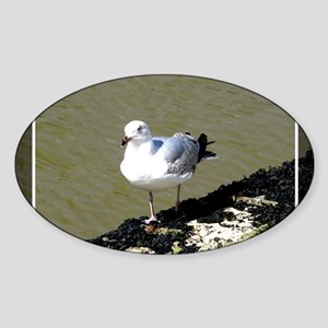 Seagull7 Sticker (Oval)
