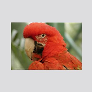 Red Macaw Parrot Rectangle Magnet
