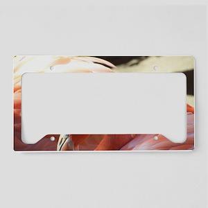 100_4164 License Plate Holder