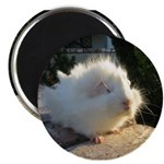 Fluffy Baby Abby Magnet