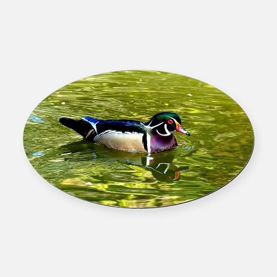 Beautiful Wood Duck Drake Oval Car Magnet