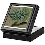 Turtle Beach Keepsake Box