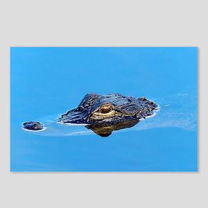 American Alligator Postcards (Package Of 8)