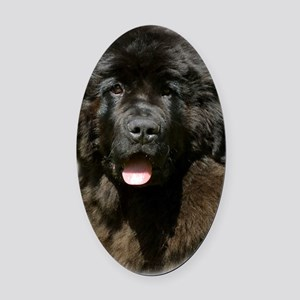 Newfoundland pup 9T086D-104 Oval Car Magnet