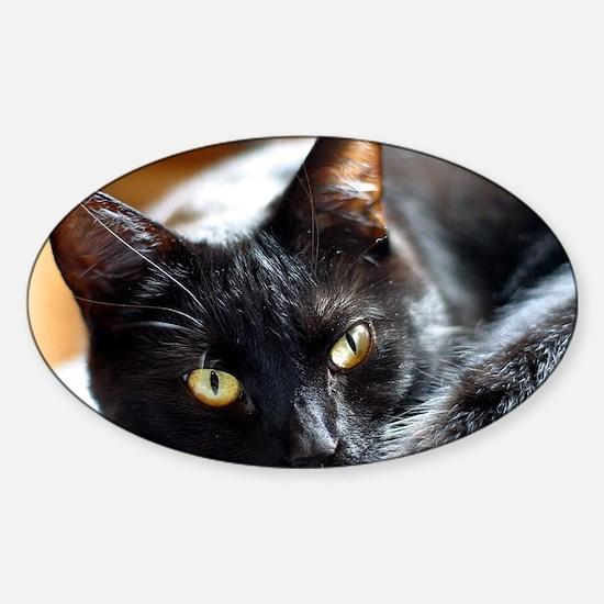 Sleek Black Cat Sticker (Oval)