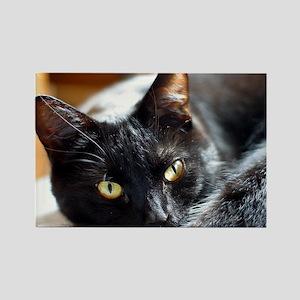 Sleek Black Cat Rectangle Magnet