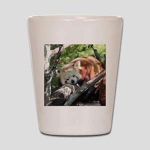 Sleepy Red Panda Shot Glass