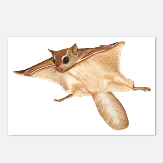Flying Squirrel Postcards (Package of 8)