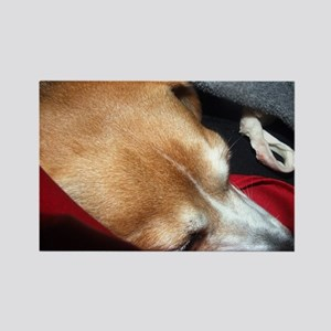 Let Sleeping Dogs Lie Rectangle Magnet