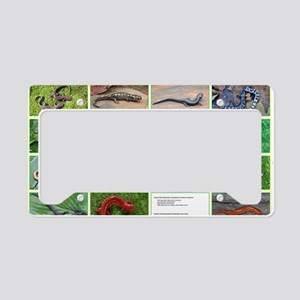 poster salamander License Plate Holder