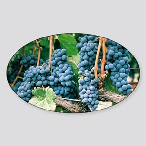 Wine Country Grapes Sticker (Oval)