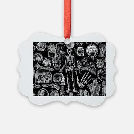 anatomy_black_pillow_cases Ornament