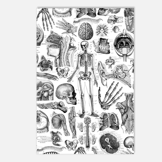 anatomy_W_twin_duvet Postcards (Package of 8)