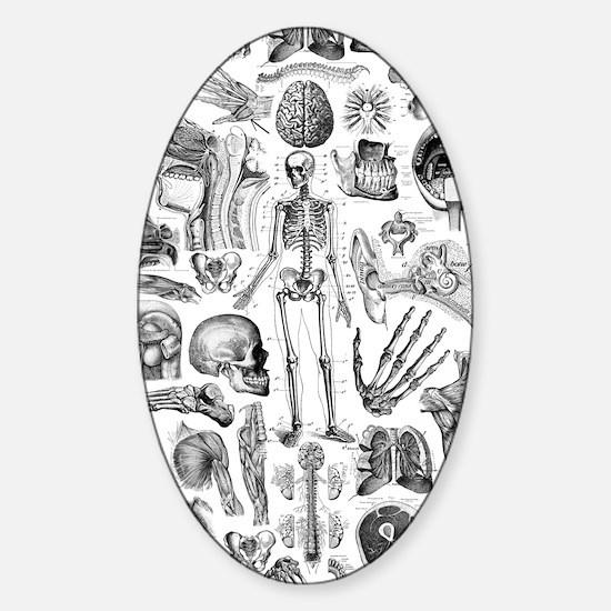 anatomy_W_twin_duvet Sticker (Oval)