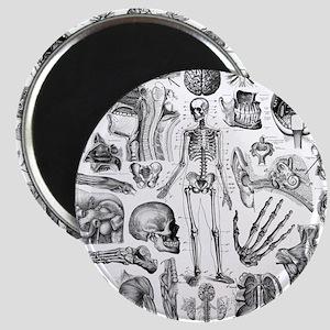 anatomy_W_twin_duvet Magnet