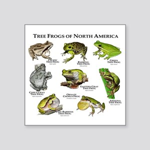 "Tree Frogs of North America Square Sticker 3"" x 3"""