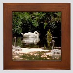 Swan Family Framed Tile