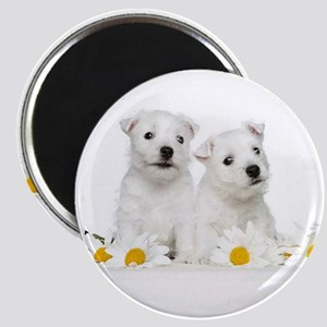Westie Puppies Magnets