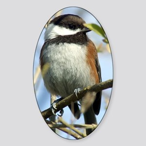 Black-Capped Chickadee Sticker (Oval)