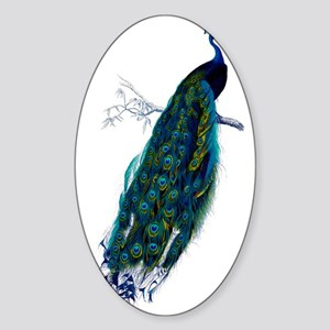 Colorful Peacock Perched Graphic Sticker (Oval)