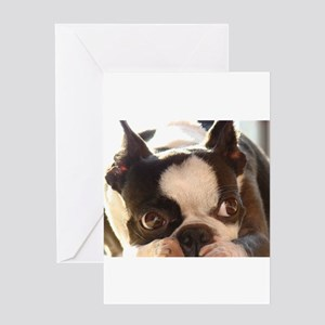 Boston Terrier Greeting Cards