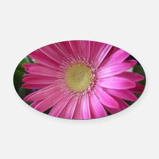 Pink Daisy Princess Oval Car Magnet