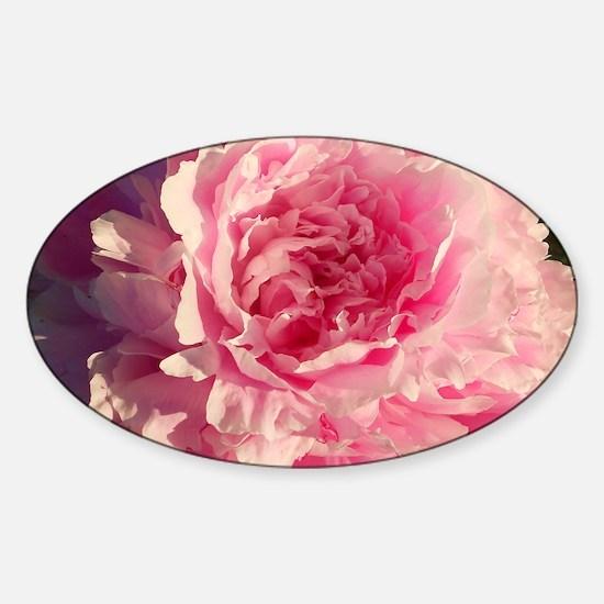 pink peony Sticker (Oval)