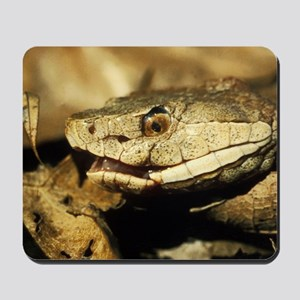 Copperhead Snake Mousepad