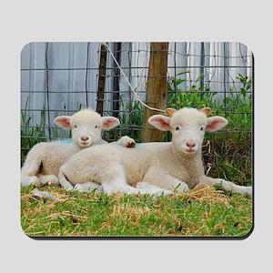 Ewephorics Buddy Lambs Mousepad