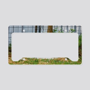 Ewephorics Buddy Lambs License Plate Holder