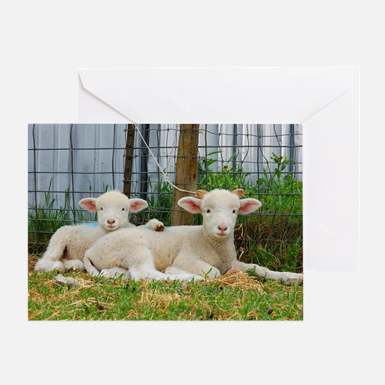 Ewephorics Buddy Lambs Greeting Card