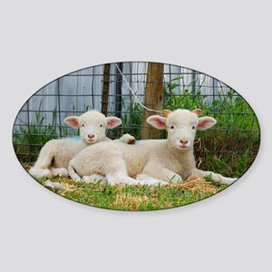 Buddy Lambs-signed by photographer Sticker (Oval)