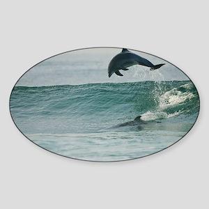 Happy Dolphin Sticker (Oval)