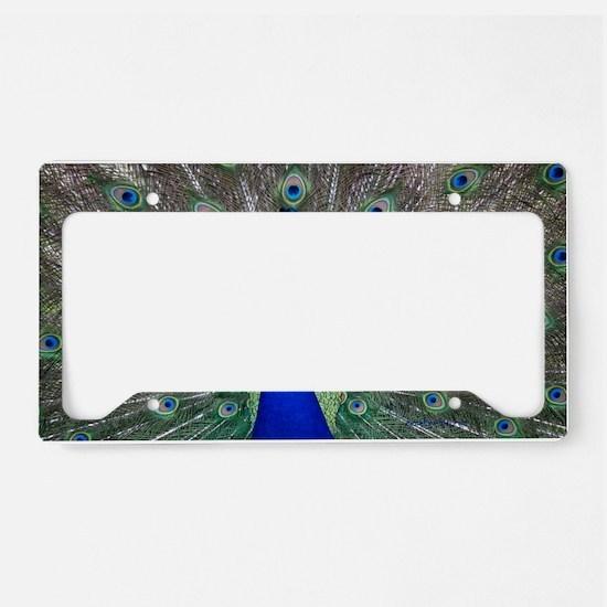 Peacock License Plate Holder