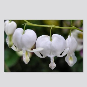 ...Dicentra 02... Postcard (Package of 8)