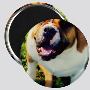 Red English Bulldog Magnet