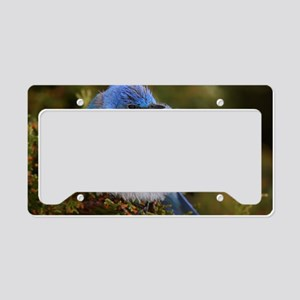 CP MB  10X14 License Plate Holder