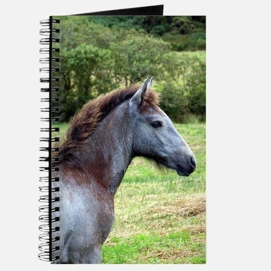 """Connemara Foal 3"" Journal"