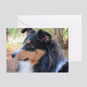 Tri-color Sheltie head study Greeting Card