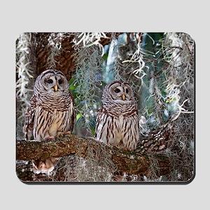Barred Owls Mousepad