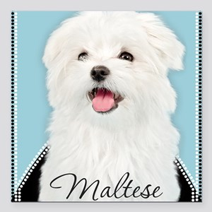 "Cute Maltese Square Car Magnet 3"" x 3"""
