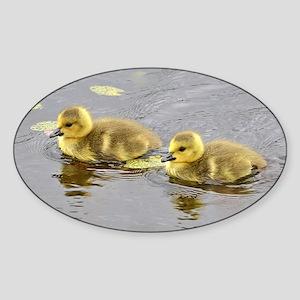 2 goslings Sticker (Oval)