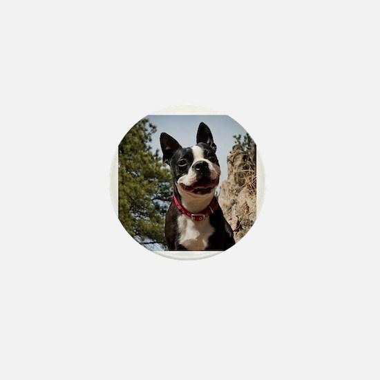 Boston Terrier Circle Mini Button